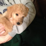 The day we brought Simba home - 2/15/13